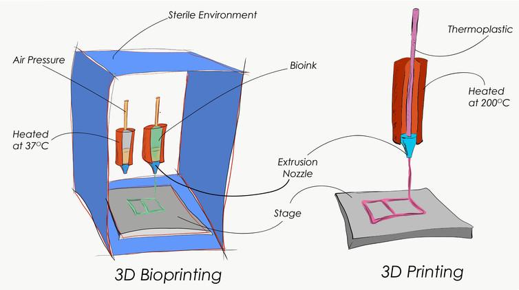 diferenças entre uma impressora 3d padrão e impressora biológica como forma de eliminar testes em animais
